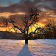 Bare tree in winter - Stock Photo