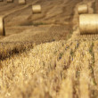 Hay field — Stock Photo