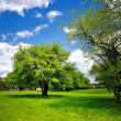 Stock Photo: Single tree on the green spring meadow