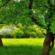 Stock Photo: Under two trees on green sunny meadow