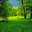 Stock Photo: Green forest before storm