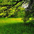 Stock Photo: Sunlight in green forest