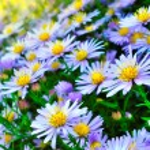 Flower bush — Stock Photo