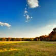 The yellow-green field near the autumnal forest — Stock Photo