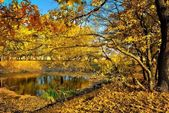 A small lake in the autumn forest — Stock Photo