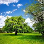 Single tree on the green spring meadow — Stock Photo