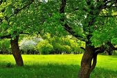 Under the two trees on the green sunny meadow — Stock Photo