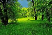 Green forest before the storm — Stock Photo