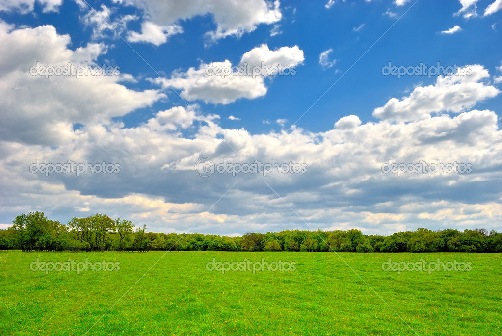 Spring green field under blue cloudy sky  Stock Photo #11409040