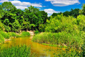 The river in the woods on a sunny day — Stock Photo