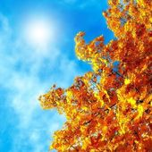 Autumn leaves of maple against the blue sky — Stock Photo