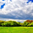 Cloudy sky over the green forest — Stock Photo