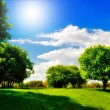 Green meadow under the shade trees — Stock Photo