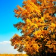 Royalty-Free Stock Photo: Autumn oak