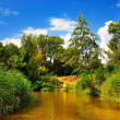 River in the forest in summer under a blue sky — Stock Photo
