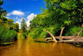 River in forest on a sunny day — Stock Photo