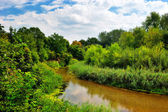The river on a sunny day — Stock Photo