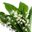 "Posy of ""lily-of-the-valley"" flowers — Stock Photo"