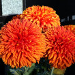 Orange chrisanthemum flowers on tomb in cemetery - Foto de Stock  