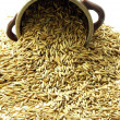 Stock Photo: Oat seeds