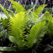Fern frond — Stock Photo #11717021