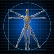 Vitruvian Human Skeleton Man - Stock Photo