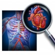 Anatomy Of The Human Heart — Stock Photo #11011987