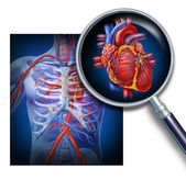 Anatomy Of The Human Heart — Stock Photo
