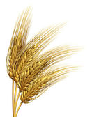 Wheat or barley Element — Stock Photo