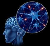 Active Human Neurons — Stock Photo