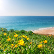 View seascape with yellow flowers and grass. Portugal, Algarve. — Stock Photo