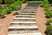 Wooden stairs in the garden. Summer. — Stock Photo