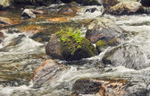 Large stones in the water. The rapid flow of the river. — Stock Photo