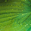 Water drops on the fresh green leaf - Stock Photo
