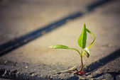 Tree growing through crack in pavement — Stock Photo