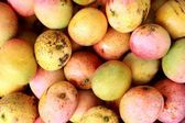 Cuban Mangoes — Stock Photo