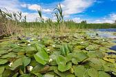 Danube Delta, Romania — Stock Photo