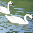 Royalty-Free Stock Vector Image: Swans float in a pond
