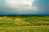 Beautiful rural view with cloudscape — Stock Photo