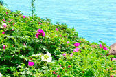 Beutiful flowers with sea — Stock Photo