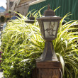 Street lights and plants — Stock Photo