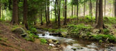 Mountains river in forest — Stock Photo
