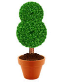 Small green tree — Stock Photo