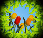Tulips view from inside the hole — Stock Photo