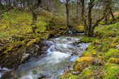 Wild river floating through a forrest — Stock Photo
