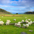 Stock Photo: Sheep in a mountain landscape
