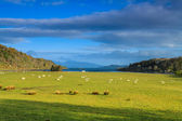 Sheep in a wide mountain landscape — Stock Photo