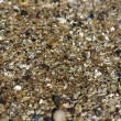 Sand grains on the beach — Stock Photo