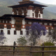 Punakha Dzong in Spring with purple Jacaranda trees (Bhutan) — 图库照片