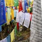 Постер, плакат: COLOURFUL PRAYER FLAGS IN BHUTAN